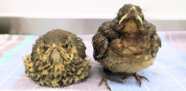 jonge vogels vogelhospitaal haarlem