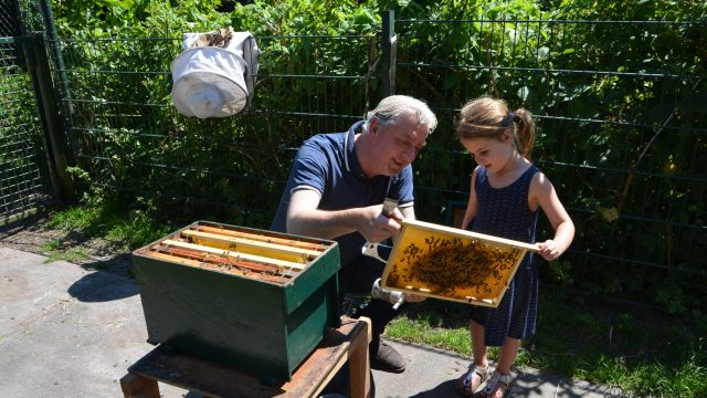 honingslingeren en bijen