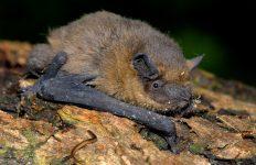 's Avonds nemen vleermuizen het bos over