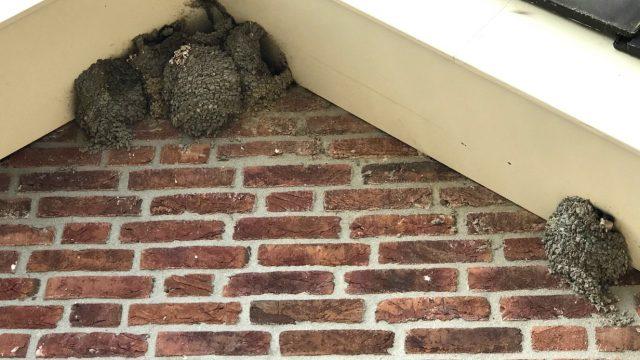 Nestlocaties van de huiszwaluw tellen, doe je mee?