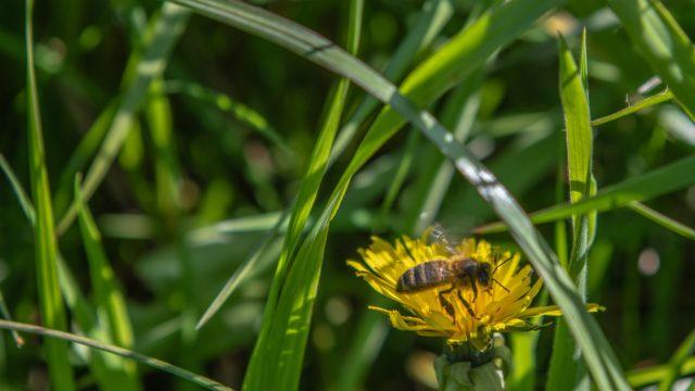 ecosysteem biodiversiteit