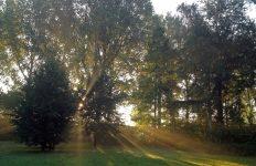 Mindful wandelen, verbinding met natuur vanuit intuïtie